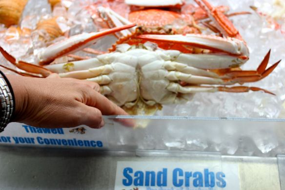 Checking the gills of the crab - lift the flap underneath the crab and if it is dark and discoloured, it is not fresh
