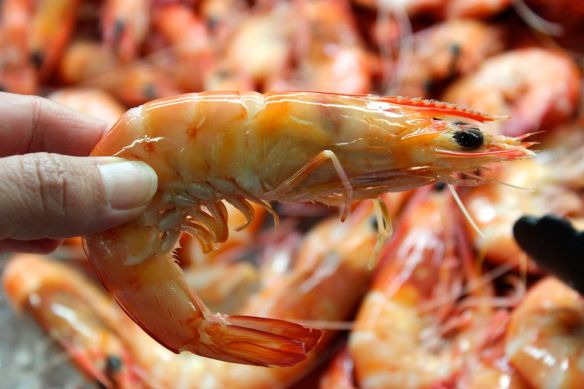 Fresh prawns do not have dark colouring under the shell of the head